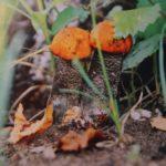 «Парочка в осеннем лесу». Фото Петрова П. А. (КРКМ ОФ № 1026)