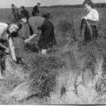 Команда поезда на уборке урожая