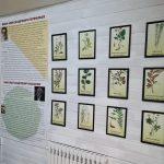 Экспозиция «Музейный ГЕрбарий»