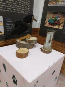 «Братья по разуму. Экспериментальное изучение интеллекта животных» – совместный выставочный проект Коношского музея с Государственным Дарвиновским музеем .
